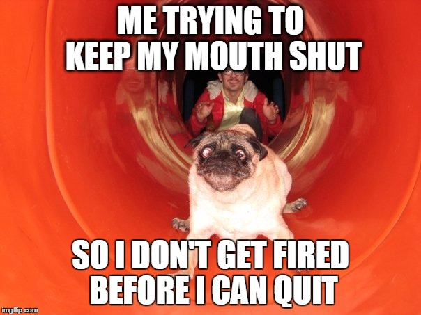 ME TRYING TO KEEP MY MOUTH SHUT SO I DON'T GET FIRED BEFORE I CAN QUIT | image tagged in dog slide | made w/ Imgflip meme maker