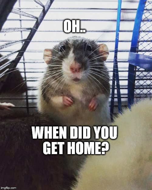 Oh, when did you get home? | OH.. WHEN DID YOU GET HOME? | image tagged in rat meme | made w/ Imgflip meme maker