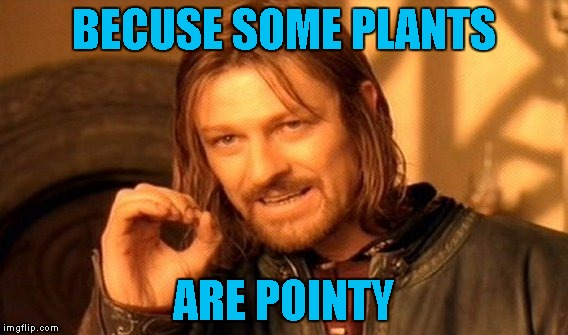 BECUSE SOME PLANTS ARE POINTY | image tagged in memes,one does not simply | made w/ Imgflip meme maker