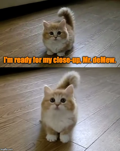 Is This The World's Cutest Kitten Or What? :-) | I'm ready for my close-up, Mr. deMew. | image tagged in close-up | made w/ Imgflip meme maker