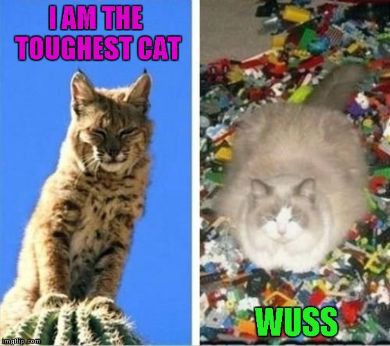 Who's the tougher cat? Lego Week ... A JuicyDeath1025 Event |  I AM THE TOUGHEST CAT; WUSS | image tagged in toughest cat,memes,legos,lego week,funny,cats | made w/ Imgflip meme maker