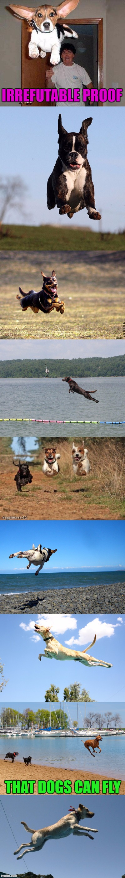 Proof of Flying Dogs | IRREFUTABLE PROOF THAT DOGS CAN FLY | image tagged in funny,meme,wmp,flying dog,dogs,funny dogs | made w/ Imgflip meme maker