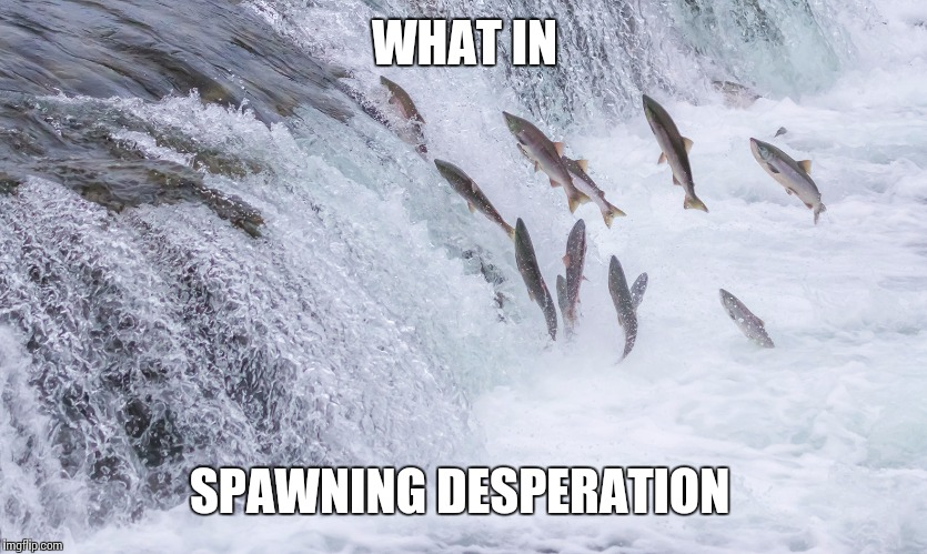 WHAT IN SPAWNING DESPERATION | made w/ Imgflip meme maker