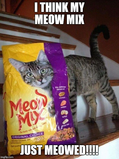 #Dead | I THINK MY MEOW MIX JUST MEOWED!!!! | image tagged in memes,funny memes,funny,cats,pets | made w/ Imgflip meme maker