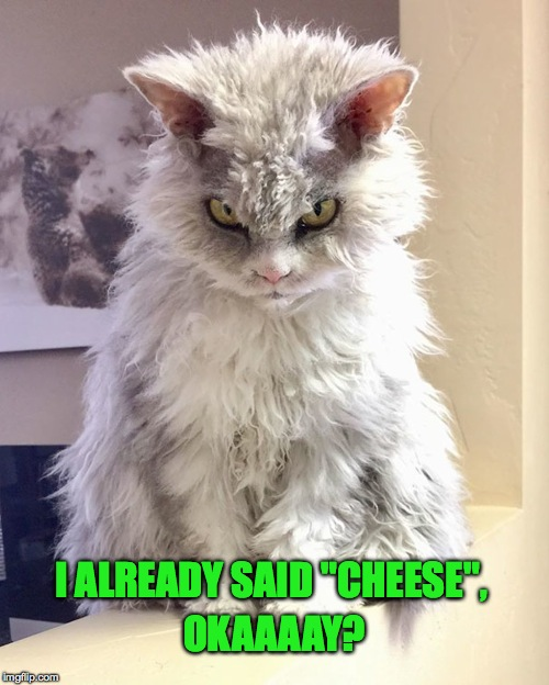 "Pompous Albert | I ALREADY SAID ""CHEESE"", OKAAAAY? 