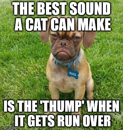 Grumpy Dog |  THE BEST SOUND A CAT CAN MAKE; IS THE 'THUMP' WHEN IT GETS RUN OVER | image tagged in grumpy dog,dogs vs cats | made w/ Imgflip meme maker