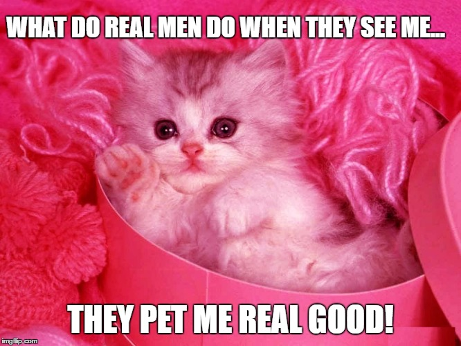 They asked 'Kitty': What do real men do when they see a pink pussy... | WHAT DO REAL MEN DO WHEN THEY SEE ME... THEY PET ME REAL GOOD! | image tagged in memes,pussy,donald trump approves,pussy cats,liberal vs conservative,real men | made w/ Imgflip meme maker