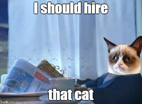 I should hire that cat | made w/ Imgflip meme maker