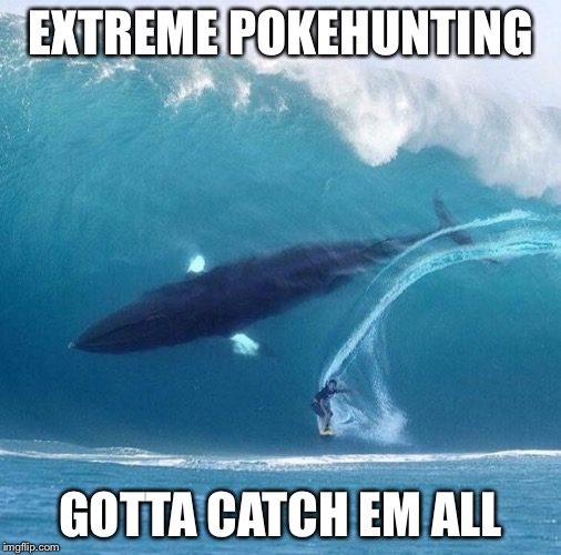 EXTREME POKEHUNTING GOTTA CATCH EM ALL | image tagged in splashy magikarp,pokemon board meeting | made w/ Imgflip meme maker