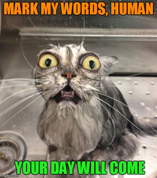MARK MY WORDS, HUMAN YOUR DAY WILL COME | made w/ Imgflip meme maker