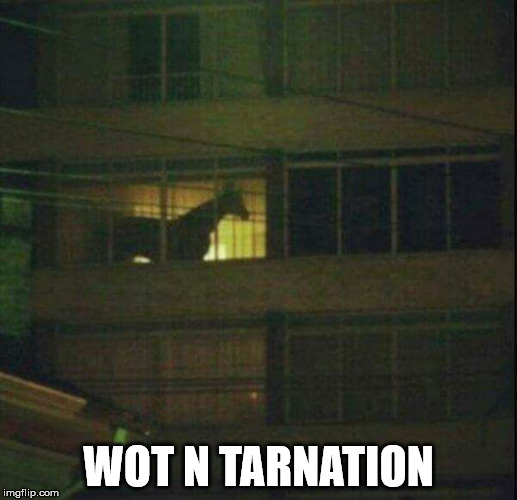 WOT N TARNATION | image tagged in wot in tarnation | made w/ Imgflip meme maker