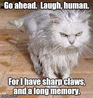 Wet kitty is not amused | Go ahead.  Laugh, human. For I have sharp claws, and a long memory. | image tagged in funny cats | made w/ Imgflip meme maker