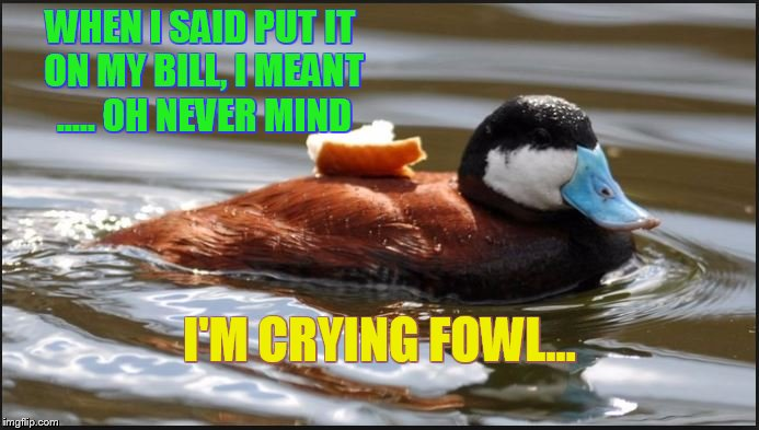 WHEN I SAID PUT IT ON MY BILL, I MEANT ..... OH NEVER MIND I'M CRYING FOWL... | image tagged in duck,puns,humor,wildlife,birds,animals | made w/ Imgflip meme maker