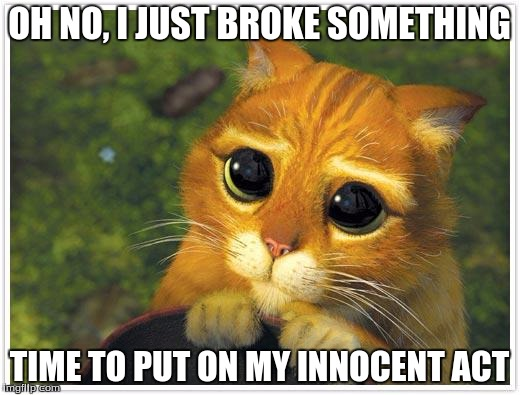 Shrek Cat Meme | OH NO, I JUST BROKE SOMETHING TIME TO PUT ON MY INNOCENT ACT | image tagged in memes,shrek cat | made w/ Imgflip meme maker