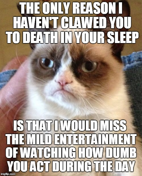 Meet your cat, everybody  | THE ONLY REASON I HAVEN'T CLAWED YOU TO DEATH IN YOUR SLEEP IS THAT I WOULD MISS THE MILD ENTERTAINMENT OF WATCHING HOW DUMB YOU ACT DURING  | image tagged in memes,grumpy cat,lolcats,cats are jerks,grumpy cat insults | made w/ Imgflip meme maker
