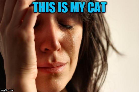 First World Problems Meme | THIS IS MY CAT | image tagged in memes,first world problems | made w/ Imgflip meme maker