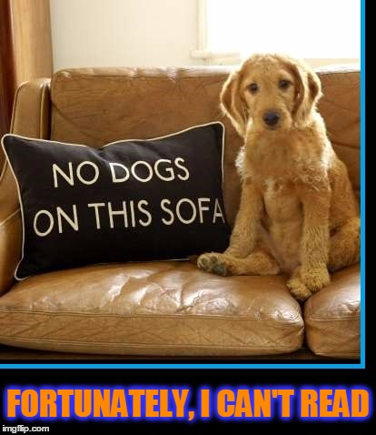 No Dogs on Sofa |  FORTUNATELY, I CAN'T READ | image tagged in vince vance,dog memes,dog on sofa,irony,vince vance and the valiants | made w/ Imgflip meme maker