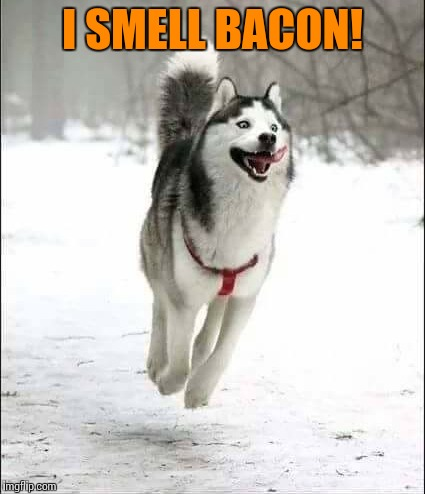 Excited dog | I SMELL BACON! | image tagged in memes | made w/ Imgflip meme maker