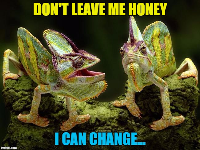 He can you know... :) | DON'T LEAVE ME HONEY I CAN CHANGE... | image tagged in chameleons,memes,animals | made w/ Imgflip meme maker