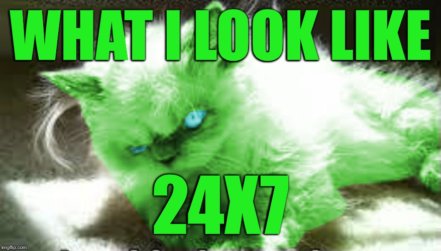 mad raycat | WHAT I LOOK LIKE 24X7 | image tagged in mad raycat | made w/ Imgflip meme maker