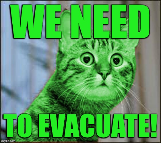 RayCat WTF | WE NEED TO EVACUATE! | image tagged in raycat wtf | made w/ Imgflip meme maker