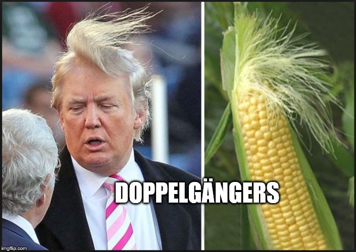 DOPPELGÄNGERS | image tagged in corn,vegetables,farming,trump hair,comb over,hair | made w/ Imgflip meme maker