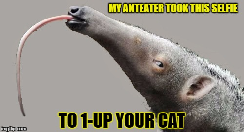 MY ANTEATER TOOK THIS SELFIE TO 1-UP YOUR CAT | made w/ Imgflip meme maker