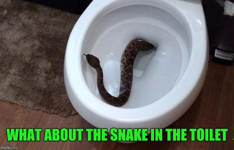 WHAT ABOUT THE SNAKE IN THE TOILET | made w/ Imgflip meme maker