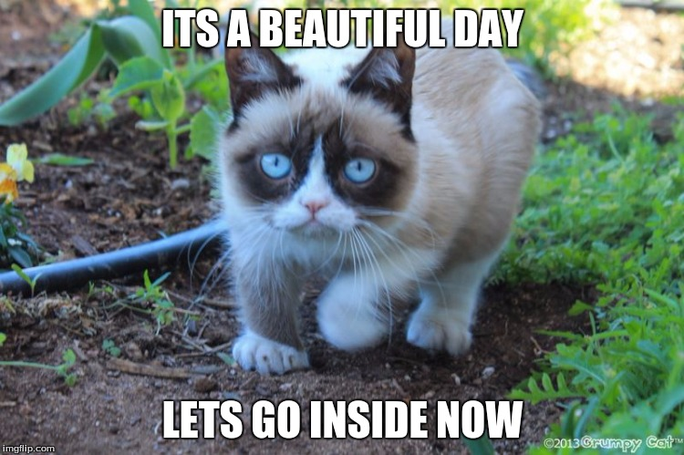 Image tagged in grumpy cat outside - Imgflip