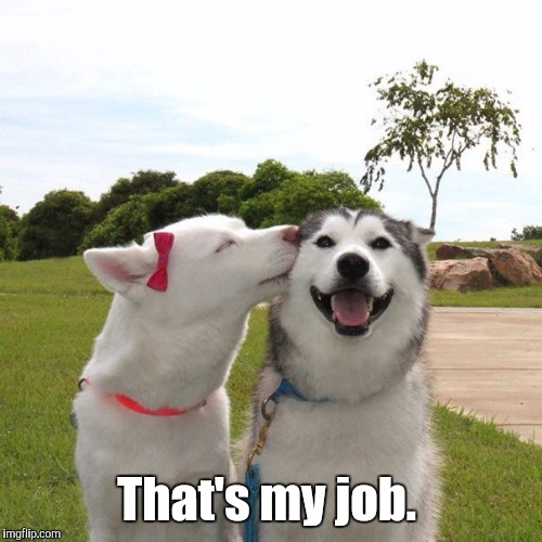 Dogs Kissing | That's my job. | image tagged in dogs kissing | made w/ Imgflip meme maker