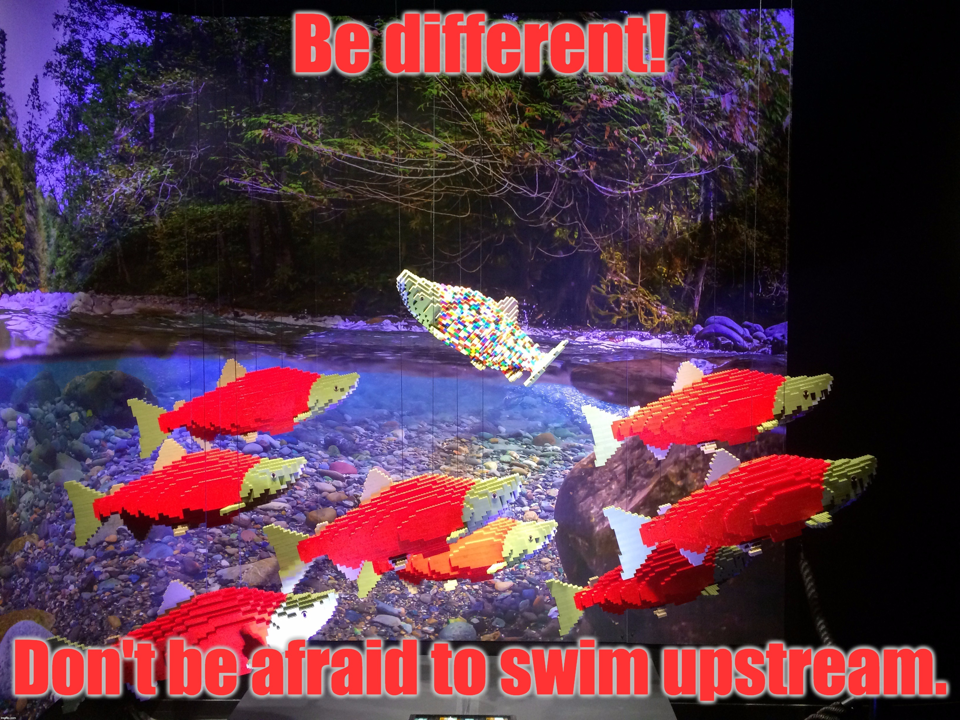 Piece Count: 7,879 [Be Different By Nathan Sawaya] (Created Exclusively For The Pacific Science Center) | Be different! Don't be afraid to swim upstream. | image tagged in memes,lego week,nathan sawaya,lego,juicydeath1025,different | made w/ Imgflip meme maker