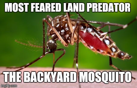 MOST FEARED LAND PREDATOR THE BACKYARD MOSQUITO | made w/ Imgflip meme maker