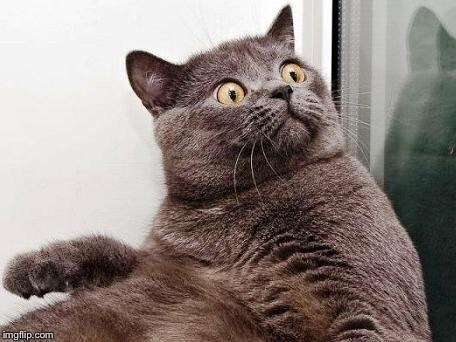 surprised cat | :) | image tagged in surprised cat | made w/ Imgflip meme maker