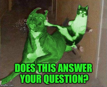 RayCat kicking RayDog | DOES THIS ANSWER YOUR QUESTION? | image tagged in raycat kicking raydog | made w/ Imgflip meme maker