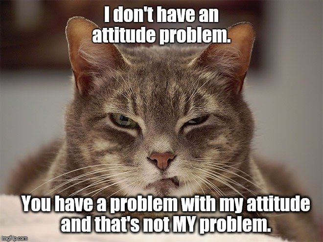 That's not MY problem | I don't have an attitude problem. You have a problem with my attitude and that's not MY problem. | image tagged in memes,cats,sarcasm,cat | made w/ Imgflip meme maker