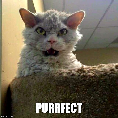 PURRFECT | image tagged in bad joke pompous albert | made w/ Imgflip meme maker