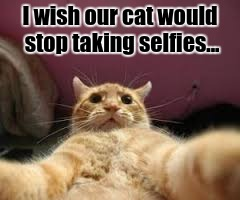Selfie cat | I wish our cat would stop taking selfies... | image tagged in memes,cats,cat,cute cat | made w/ Imgflip meme maker