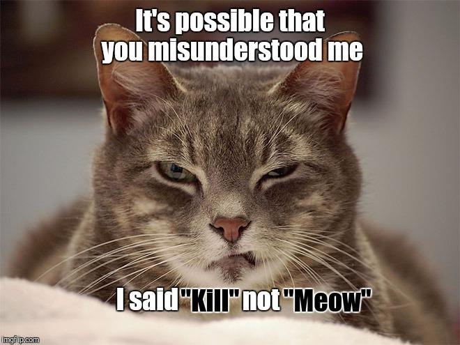 Cat Sarcasm Gif
