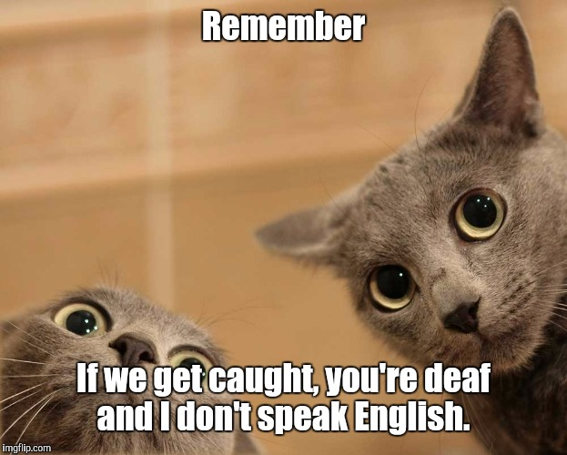 Planning mischief  | Remember If we get caught, you're deaf and I don't speak English. | image tagged in cats,memes,funny,cat | made w/ Imgflip meme maker