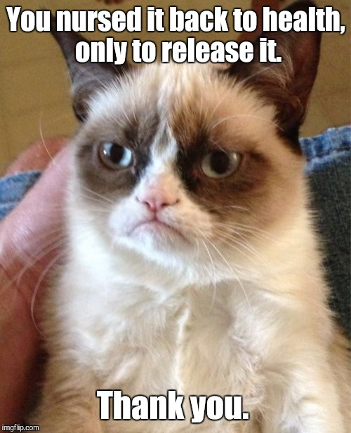 Grumpy Cat Meme | You nursed it back to health,  only to release it. Thank you. | image tagged in memes,grumpy cat | made w/ Imgflip meme maker