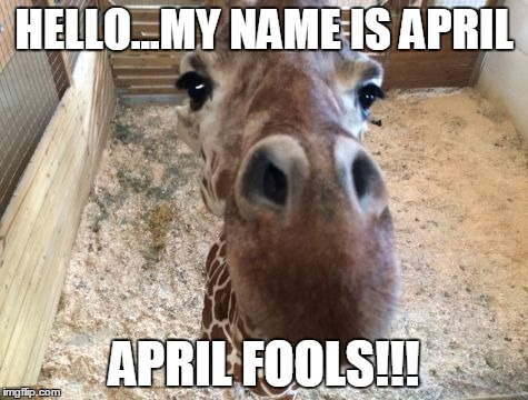 April giraffe | HELLO...MY NAME IS APRIL APRIL FOOLS!!! | image tagged in april giraffe | made w/ Imgflip meme maker