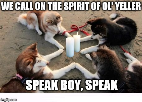 "Looking for a ""medium dog""?  
