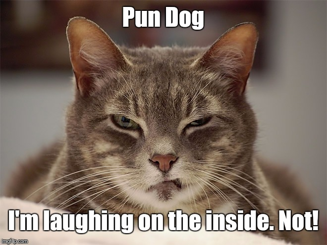 Pun Dog I'm laughing on the inside. Not! | made w/ Imgflip meme maker