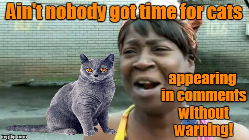 Aint Nobody Got Time For That Meme | Ain't nobody got time for cats appearing in comments without warning! | image tagged in memes,aint nobody got time for that | made w/ Imgflip meme maker