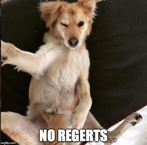 No Regerts | NO REGERTS | image tagged in super scooty,dog,tinder,bad pun dog,sexy dancer | made w/ Imgflip meme maker