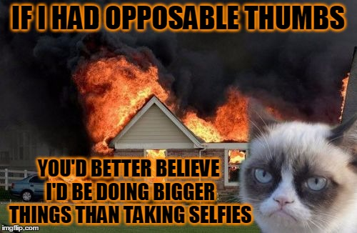 IF I HAD OPPOSABLE THUMBS YOU'D BETTER BELIEVE I'D BE DOING BIGGER THINGS THAN TAKING SELFIES | made w/ Imgflip meme maker