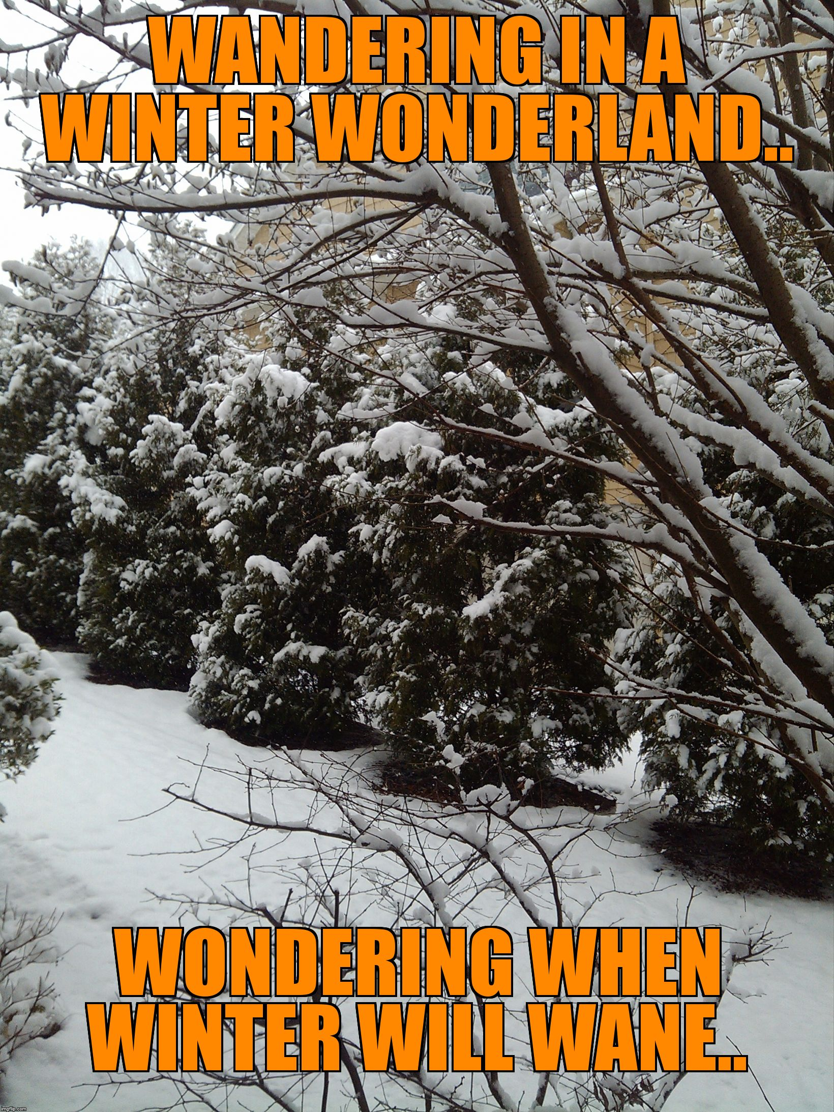 WANDERING IN A WINTER WONDERLAND.. WONDERING WHEN WINTER WILL WANE.. | image tagged in winter wonderland | made w/ Imgflip meme maker