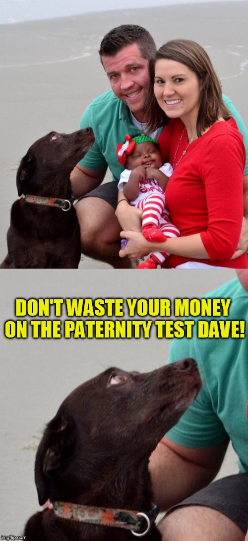 Even the dog knows Dave! | DON'T WASTE YOUR MONEY ON THE PATERNITY TEST DAVE! | image tagged in funny memes,meme,paternity test,dog,laughs,its obvious | made w/ Imgflip meme maker