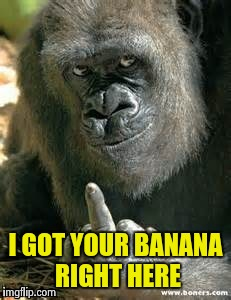 I GOT YOUR BANANA RIGHT HERE | image tagged in gorilla smartass | made w/ Imgflip meme maker