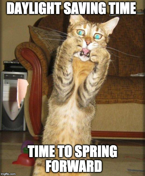 Remember, it's daylight saving time this weekend. | DAYLIGHT SAVING TIME TIME TO SPRING FORWARD | image tagged in scaredy cat,spring forward,scumbag daylight savings time,daylight saving time,bacon | made w/ Imgflip meme maker